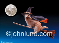 A funny animal stock picture of a dog dressed as a witch and riding a broom in a haunting Halloween illustration. Scary halloween dog pictures.