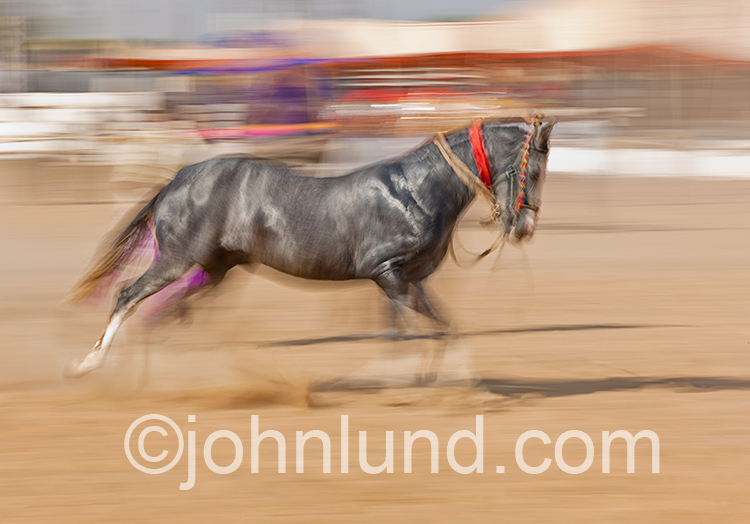 A running horse gallops in a corral in a colorful stock photo about speed, motion, and horses.