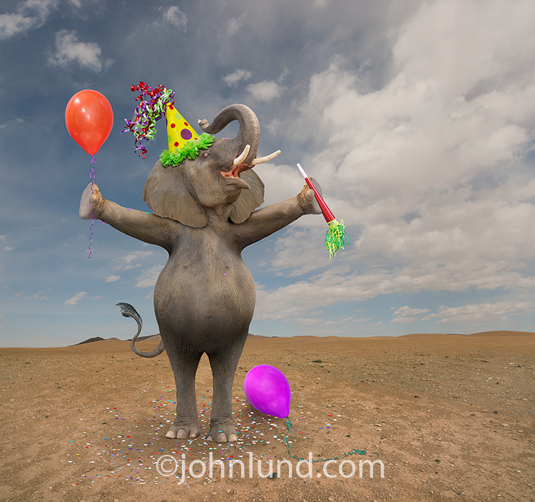 "An elephant holds a balloon and noisemaker and wears a party hat in a funny birthday photo that might be captioned ""Have a HUGE birthday"" or ""Wishing You The Biggest Birthday Ever!""."