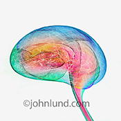 Activity in the human brain is the subject of this colorful stock photo that utilizes  vividly colored light trails to create a human brain filled with firing neurons, thoughts and connections.