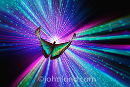 A butterfly symbolizes innovation as it flutters through a dynamic and surreal environment of vivid streaks of light in a stock photo.