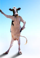 picture of cow standing on two legs