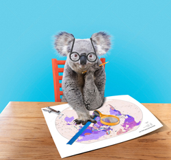A funny Koala bear wears glasses as he sits before a mpa planning his next travel adventure.