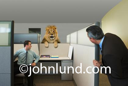 Picture of a lion in an office cubicle. Two office workers are looking surprised as they spot the lion with it's paws draped over a cubicle wall. Funny office picture.