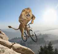 A lion is caught in mid jump on a mountain bike in this photo as he rides a steep mountain single track trail and wearing an expression of joy and excitement.