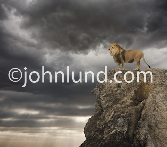 A majestic lion stands on top of a jagged cliff, with a backdrop of storm clouds, and Gazes into the distance, seeking.