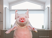 A smug looking pig has just applied her lipstick in this humorous image about deception, disguise, and things that are not what they appear to be.