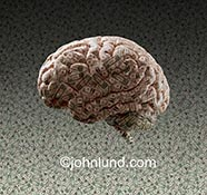 A human brain is imprinted with money against a background of more money in a stock photo about money issues, the psychology of money and intellectual property.