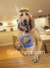 Funny picture of a bloodhound with an icepack on his head and coffee in his paw and a hangover...he just needs some hair of the dog!
