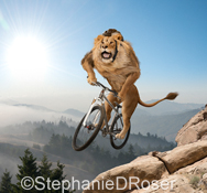 A mountain lion, wearing a cycling helmet,