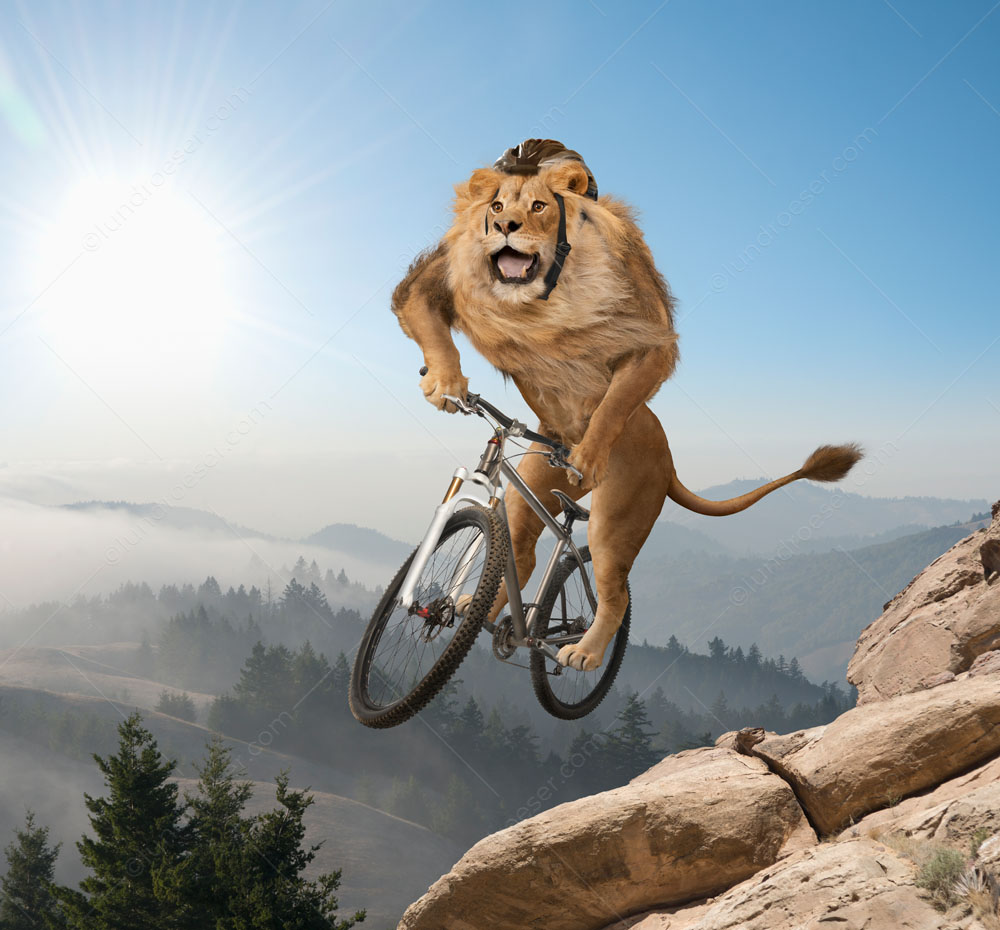 "A mountain lion, wearing a cycling helmet, ""gets air"" on a mountain bike over mountainous terrain in a funny animal stock photo."