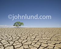 Picture of a lone Oak tree surviving in a drought stricken environment of a vast parched, dry, and cracked expanse of earth in deperate need of water.