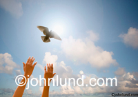 Picture of a woman's  hands releasing a white dove into the sky and in front of the sun in an act of peace and freedom. PIcture of  dove release.