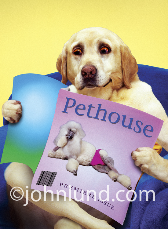 A yellow lab sits in an easy chair reading PetHouse magazine in a parody of men's magazines.