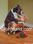 Funny pictures of a Boxer dog kissing a cat with a bouquet of flowers on the wooden floor beside them.