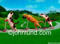 Funny animal pictures and stock photo of three cats on razor scooters racing down a winding foot path in a park setting.