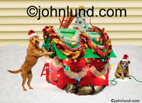 Stock shot and funny animal picture of a group of dogs Trimming their dog house with Christmas Decorations