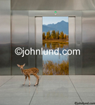 Picture of an elevator with nature inside: a fawn stands in the lobby in an image about back to nature, and getting away. Elevator photographs.