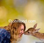 Stock photo of a spotted fawn nuzzling a young teen girl in the great outdoors in a image that shows innocence and harmony with the wild. Pictures of deer with human.