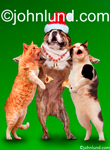 Two cats and a bulldog sing Christmas carols together while the bulldog wears a Santa's had in this funny animal picture on a green background