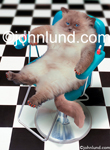 A cat leans back in a manicure chair having just had a manicure, its claws painted red as she sits in a blue salon chair.