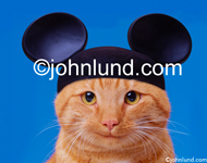 Stock photo and funny animal picture of a cat wearing a pair of Mickey Mouse ears and looking slyly at the camera. Greeting Card Picture.
