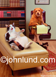 Funny animal stock photo of a  cat telling her problems to a dog psychiatrist while laying on a couch in his office.