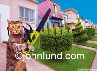 Funny picture of a cat wielding a chainsaw and trimming the hedges, shrubs and bushes into decorative shapes, created for use in a line of humorous greeting cards.