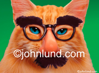 Stock photo and funny animal picture of a cat wearing Groucho Glasses and a moustache and photographed against a green background.