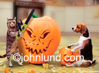 Funny pet Stock photos and funny Halloween pictures of a Beagle dog and a cat carving pumpkins in a Kitchen. The cat is using a chainsaw.