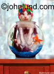 A cat, wearing a colorful swim cap, is immersed in a fish bowl with a goldfish in this funny animal picture of a wet kitty: Funny Birthday Card.
