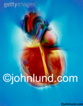 A dynamic photo of a human heart (actually a model of a human heart) that indicates vitality and motion and anatomy issues.