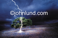 Picture of Lightning striking an Oak tree and traveling down the trunk to the ground on a dark and stormy night in a field of weeds.