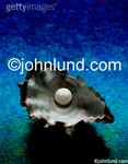 Stock photo of a pearl in an oyster shell representing the beauty and nature of pearls, or the value of a scarce item, shot on a blue green background.