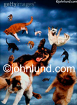 Stock photo of raining cats and dogs: Animals fall through the sky that is filled with rain clouds.