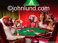 Funny picture of five dogs playing poker together in a parody of C.M. Coolidge who painted a series of such animal images.