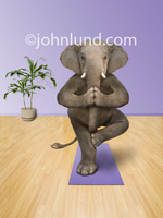 Elephants Doing Yoga Exercises on a Purple Yoga Mat.   The elephant is standing on one leg and holding his trun with his ... feet?