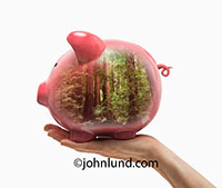 A piggy bank is filled with the image of a redwood forest in a metaphorical image about green investment.