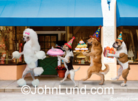 A haughty Poodle walks down the street with her entourage of a Beagel, a Bulldog, and a Golden Retriever in a funny pet picture.