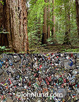 This image combines a photo of a bale of recycled cans with a redwood forest contrasting waste management with nature in a stock photo about conservation and ecology.