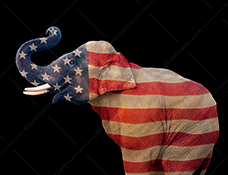 The Republican elephant in this photo is multiple exposed with an American Flag in a stock photo, on a black background, about politics, the Republican Party, democracy and government (white background also available.)