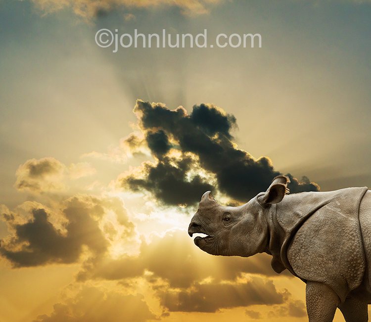 This sunset rhinoceros portrait, complete with God Rays, can be seen as commentary on its endangered status and a call to action for heroic efforts to save rhinos from extinction.