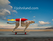 A Cheetah streaks down a road on a skateboard with a rocket roped to his back in a humorous stock photo about speed and more speed.