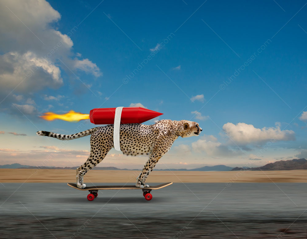 A rocket-powered cheetah stock photo...when fast isn't fast enough!