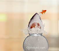 A shark explodes out of a fish bowl chasing a gold fish in an image about unexpected risks and dangers.