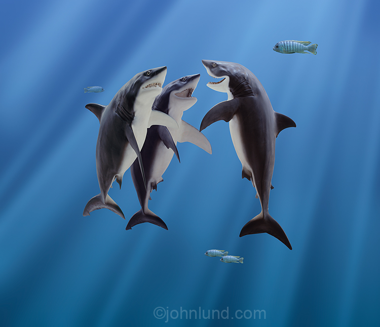 Three sharks pause in a get together in a humorous stock and greeting card photo ripe for all kinds of funny captions!