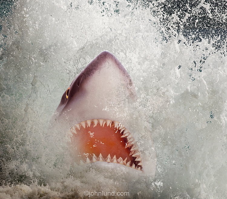 A shark, mouth full of razor sharp teeth, explodes out of the water in a stock photo about risk, danger and unexpected threats.