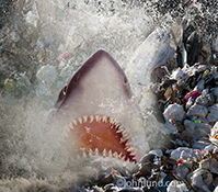 A shark explodes out of the wate amid piles of plastic and garbage in a stock photo created to bring attention to issues of plastic pollution in our oceans and other environmental concerns.