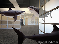 Great White sharks swim through an office in which two executives, oblivious to the danger, engage in a discussion.