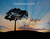In an idyllic scene a single tree is silhouetted against a god ray sunrise in an image about new beginnings, fresh starts, and possibilities.